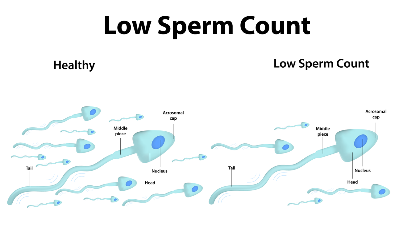 Herbs To Increase Low Sperm Count And Boost Male Fertility